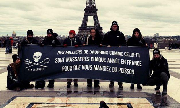 6000 dauphins tués par an sur la façade atlantique
